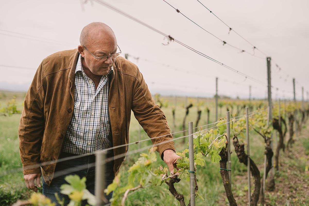 Fritz > Fürsorglich im Weingarten